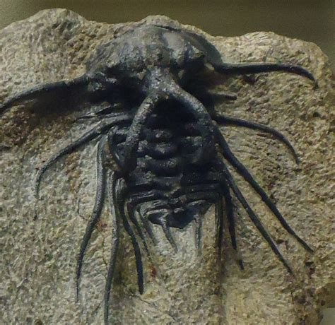 Looking For Free Search Scary Looking Trilobite Free Domain Stock Photo