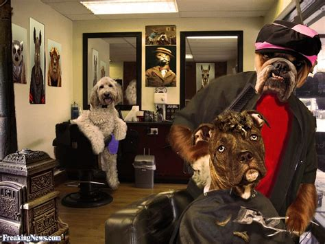 shoo for puppies animal groomers pictures freaking news