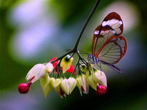 imagenes de rosas y mariposas bellas fotografias de mariposas y flores fotografias y fotos