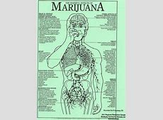 Effects of Marijuana | Effects of prolonged use of ... Lungs After Smoking Clip Art