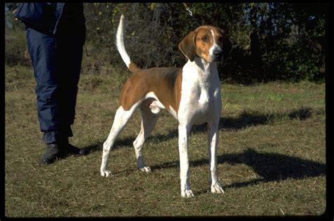 american kennel club dog breeds redirect