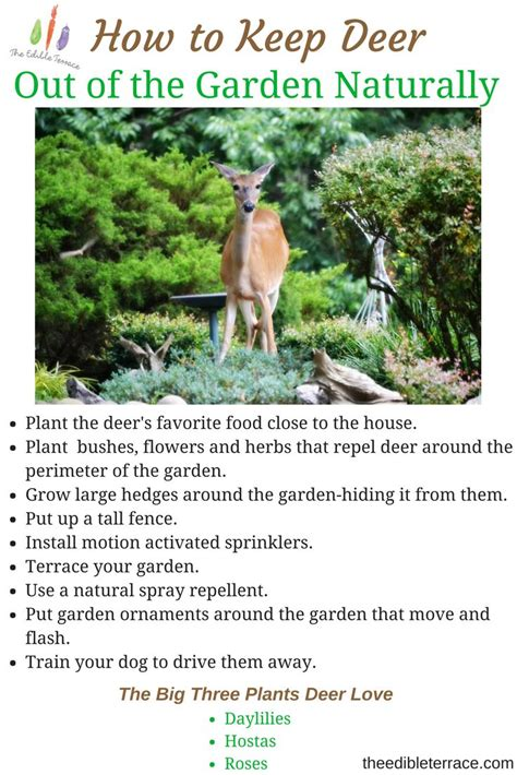 185 Best Weeds And Pests Images On Pinterest Container How To Keep Deer Out Of Vegetable Garden