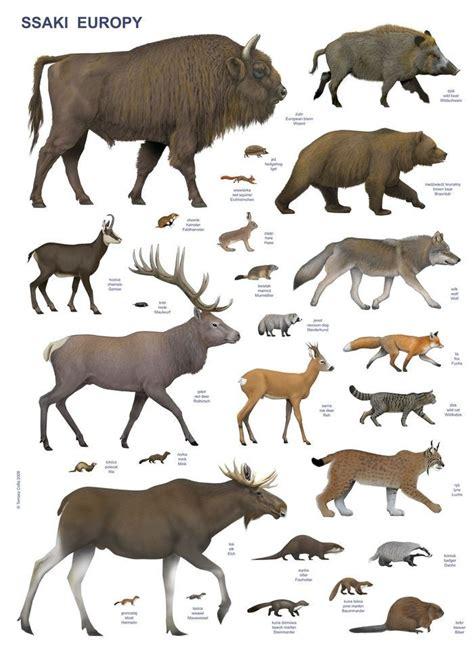animals  tomasz cofta  coroflotcom animal posters animal sketches majestic animals