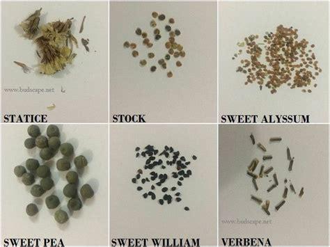 flower seed identification chart flower seeds flowers