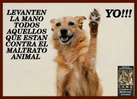 aviso este repaso al maltrato europeo a los refugiados no al maltrato animal chiriqu 205 no al maltrato animal en