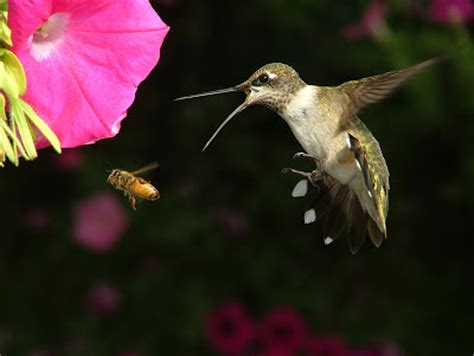 how to feed hummingbirds the garden of eaden