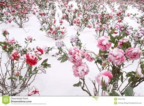 platic bloemen plastic bloemen stock foto afbeelding bestaande uit peony