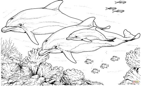 coloring page of bottlenose dolphin 301 moved permanently