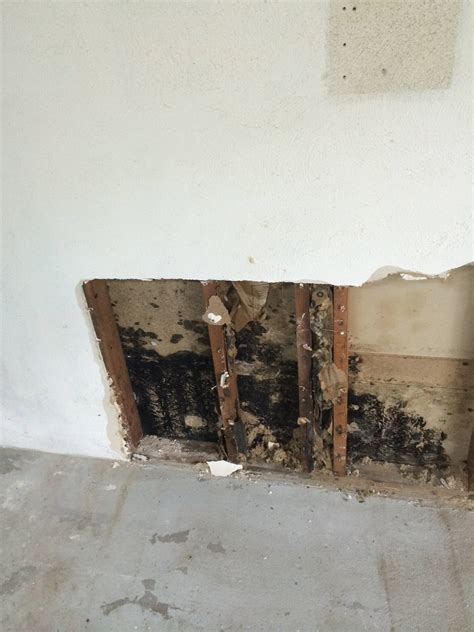should you buy a house with mold buying a house with mold in basement 28 images basement waterproofing foundation