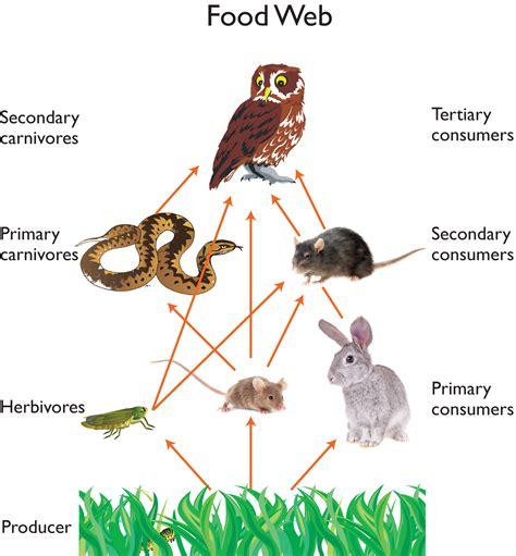 food websites owl food web owls owl food food webs and owl