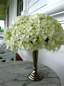 they re hydrangeas visionsofstyle s blog
