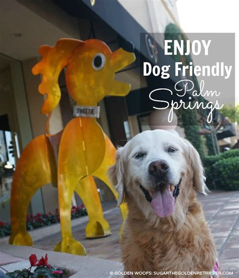 palm dogs 7 ways to enjoy friendly palm springs golden woofs