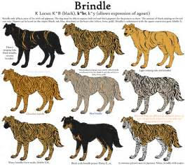 pitbull coat colors colors guide brindle by leonca on deviantart