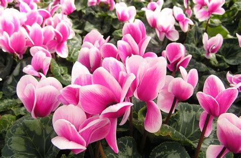 fiori da giardino foto fiori invernali per esterni foto ecoo