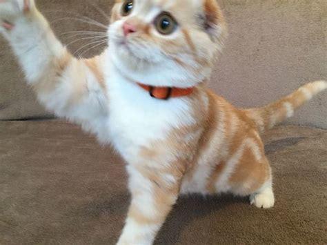 gratis kittens aangeboden kittens aangeboden
