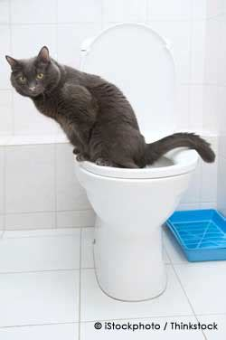 cat peeing in bathtub common cat disorder might be a plea for medical help