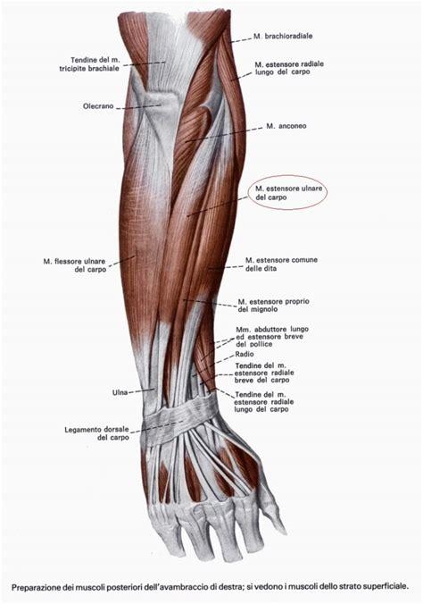 i diversi tipi di i diversi tipi di forza muscolare
