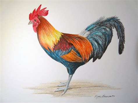 rooster colors pen the aspiring illustrator page 3