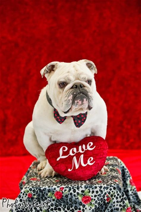 valentines day bulldog quot me quot a bulldog an original work from www