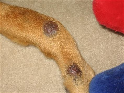 sores on dogs legs allergies