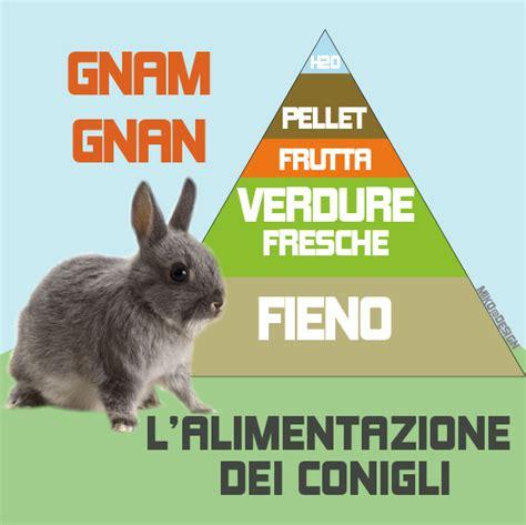 diarrea dieta alimentare l alimentazione coniglio nano i suoi consigli