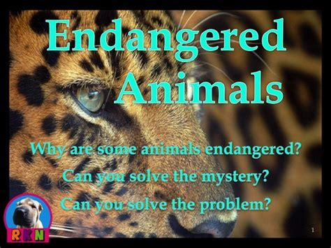 Electra Hones Magic Skills by 1000 Ideas About Endangered Animals Lessons On
