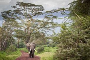 Study Chair Africa S Protected Areas Missing 75 Percent Of Their