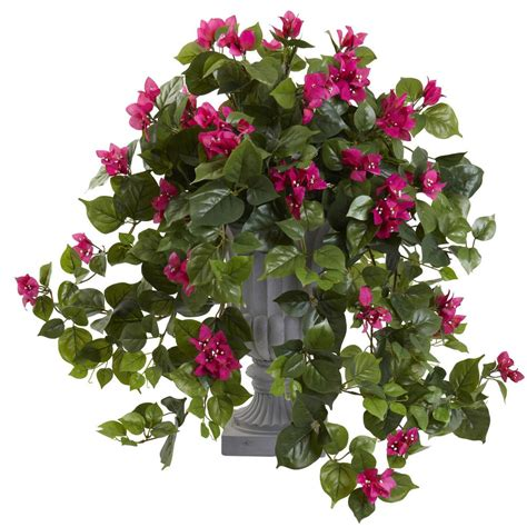 nearly 27 in bougainvillea with decorative urn