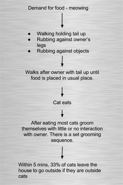 behavior before cat feeding behavior before and after