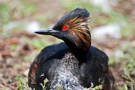 wwwwild bird photocom3gp b i r d needs a new nest indiegogo