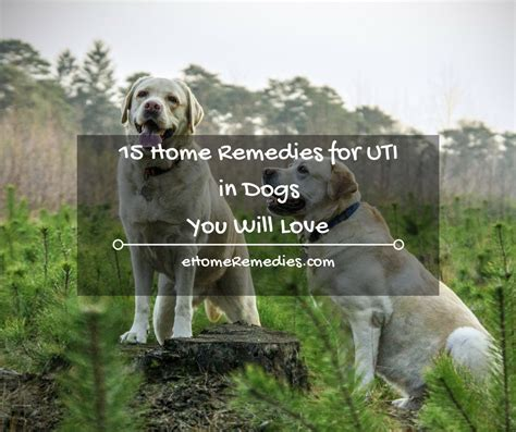 uti in dogs 15 home remedies for uti in dogs you will ehome remedies