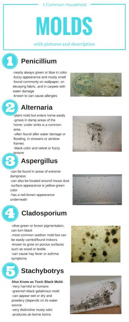 5 types of who can ruin your identifying and dealing with narcissists sociopaths and other high conflict personalities books how to identify 5 common types of mold in your household