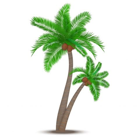 Coconut Tree coconut trees vectors photos and psd files free