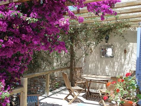 greek gardens gardens lush and colors on pinterest