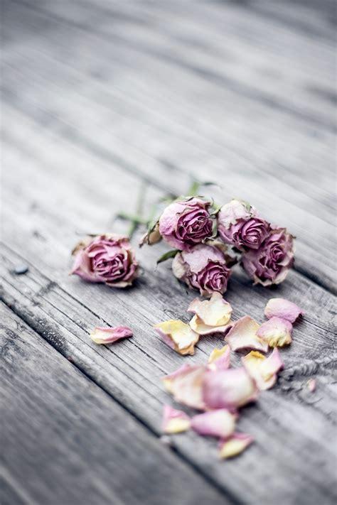 Kotak Akrilik Bunga Mawar Ungu Purple Preserved Flower gambar tangan menanam kayu ungu daun bunga cinta mawar musim semi warna kering