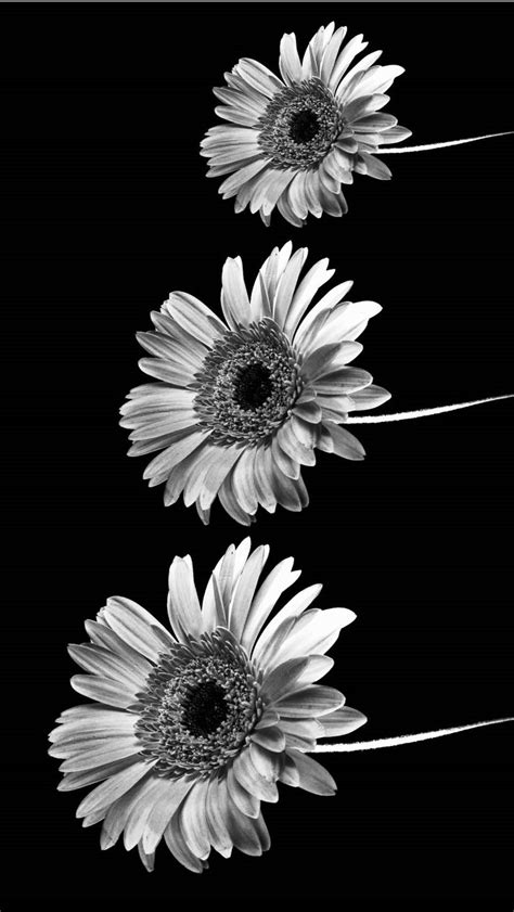 wallpaper iphone white tumblr black and white iphone wallpapers tumblr fond d 233 cran