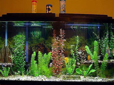 Small Fish Tank Decoration Ideas Interior Design | small fish tank decoration ideas interior design