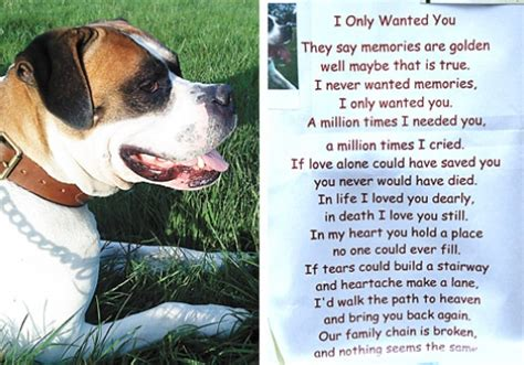 comfort pet law quotes for grieving pet owners quotesgram