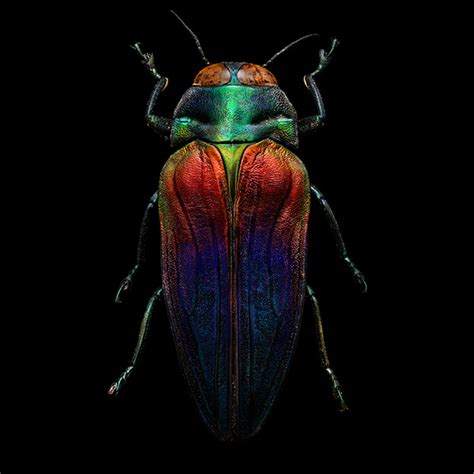 bug tri microsculpture the insect portraits of levon biss