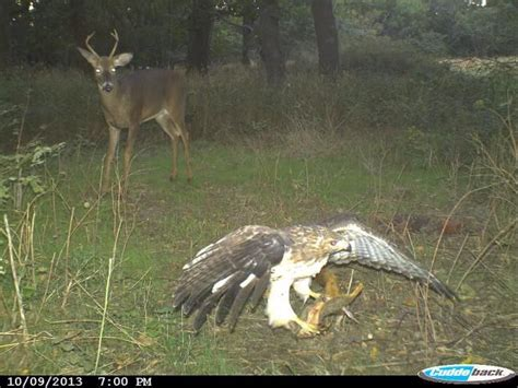 24 best images about trail camera on pinterest a deer