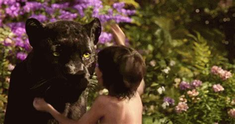 the popular mowgli gifs everyone s