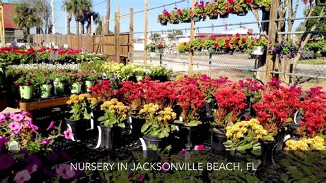 Garden Center Nursery Rockaway Garden Center Nursery Jacksonville Fl