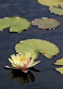 The Lotus Pad 1000 Images About Caddo On Lakes And