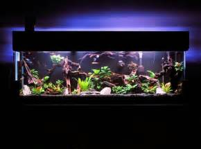 Assorted Freshwater Tropical Fish Tank Setup Ideas   YourPetClip