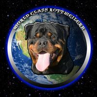 rottweiler puppies for sale in buffalo ny world class rottweilers rottweiler breeder