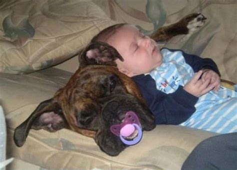 sleeping baby and puppy daily picdump 350