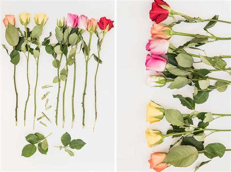 Wie Lange Halten Schnittblumen 10 tipps schnittblumen frisch halten sch 246 n bei dir by depot