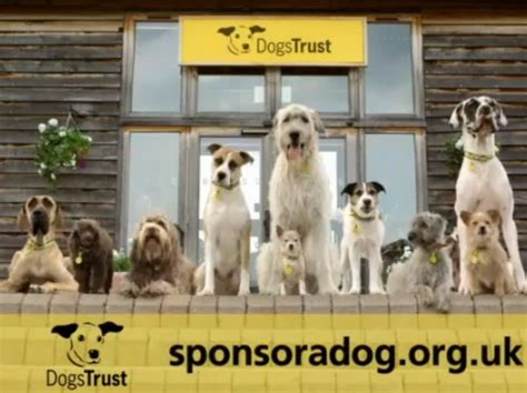 and the tr dogs dogs trust in sponsor a push decisionmarketing