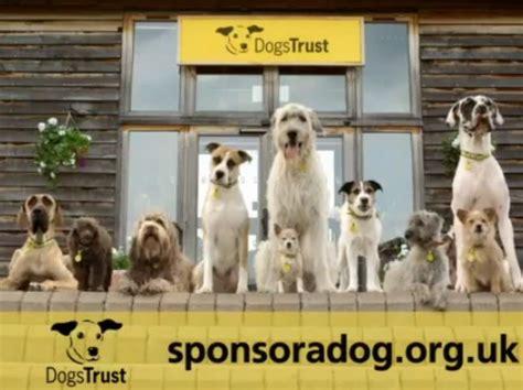 dogs trust dogs trust in sponsor a push decisionmarketing