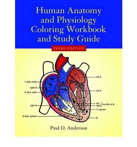 anatomy and physiology coloring workbook answers immune system human anatomy physiology coloring workbook paul d
